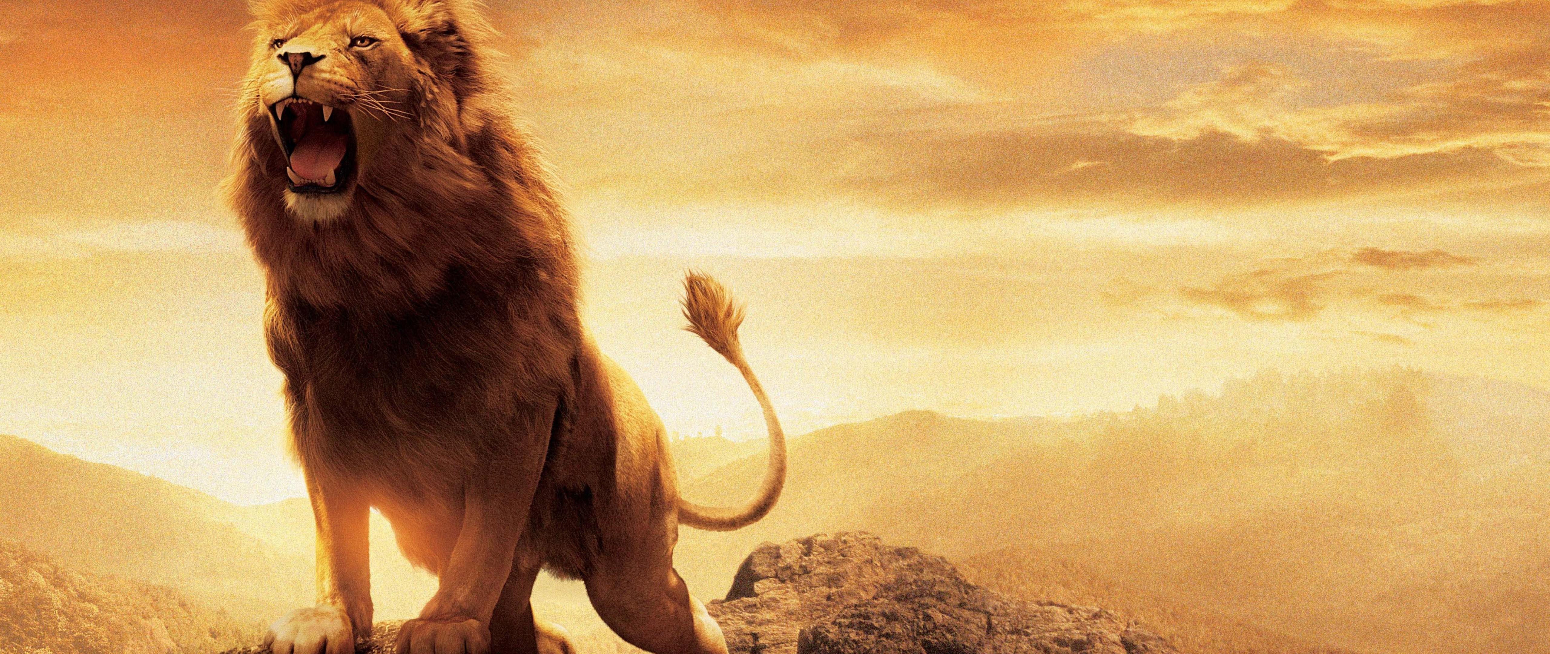 Aslan narnia lion hd wallpaper for desktop and mobiles 4k - Lion 4k wallpaper for mobile ...