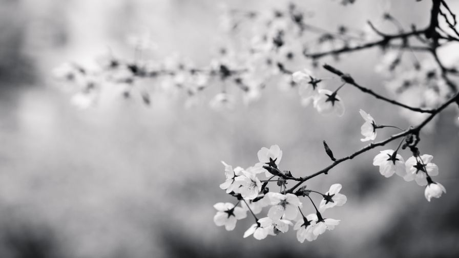Black and White Blossoms