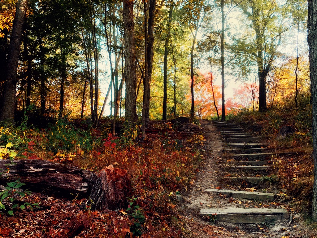 Deep Forest Steps