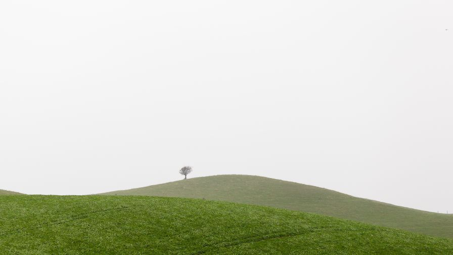 Lonely Tree on a Grassy Hillside