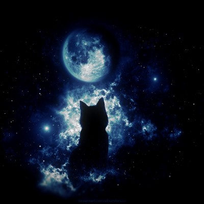 Anime Cat Staring At The Moon Hd Wallpaper Instagram Profile