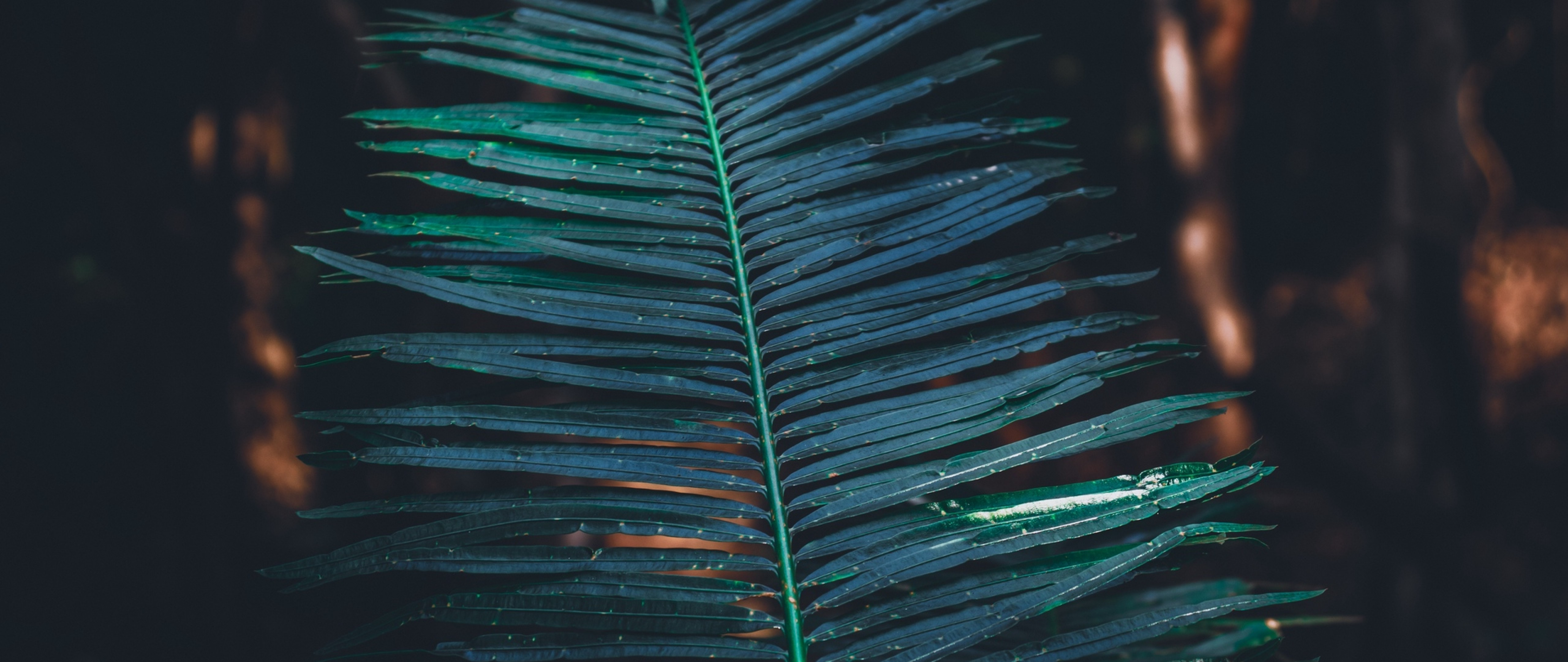 Carved Tropical Leaves Hd Wallpaper 4k Ultra Hd Wide Tv Hd Wallpaper Wallpapers Net 1920x1080 photoshop background nature wallpapers full hd 1080p photoshop wallpapers hd, desktop backgrounds. carved tropical leaves hd wallpaper 4k