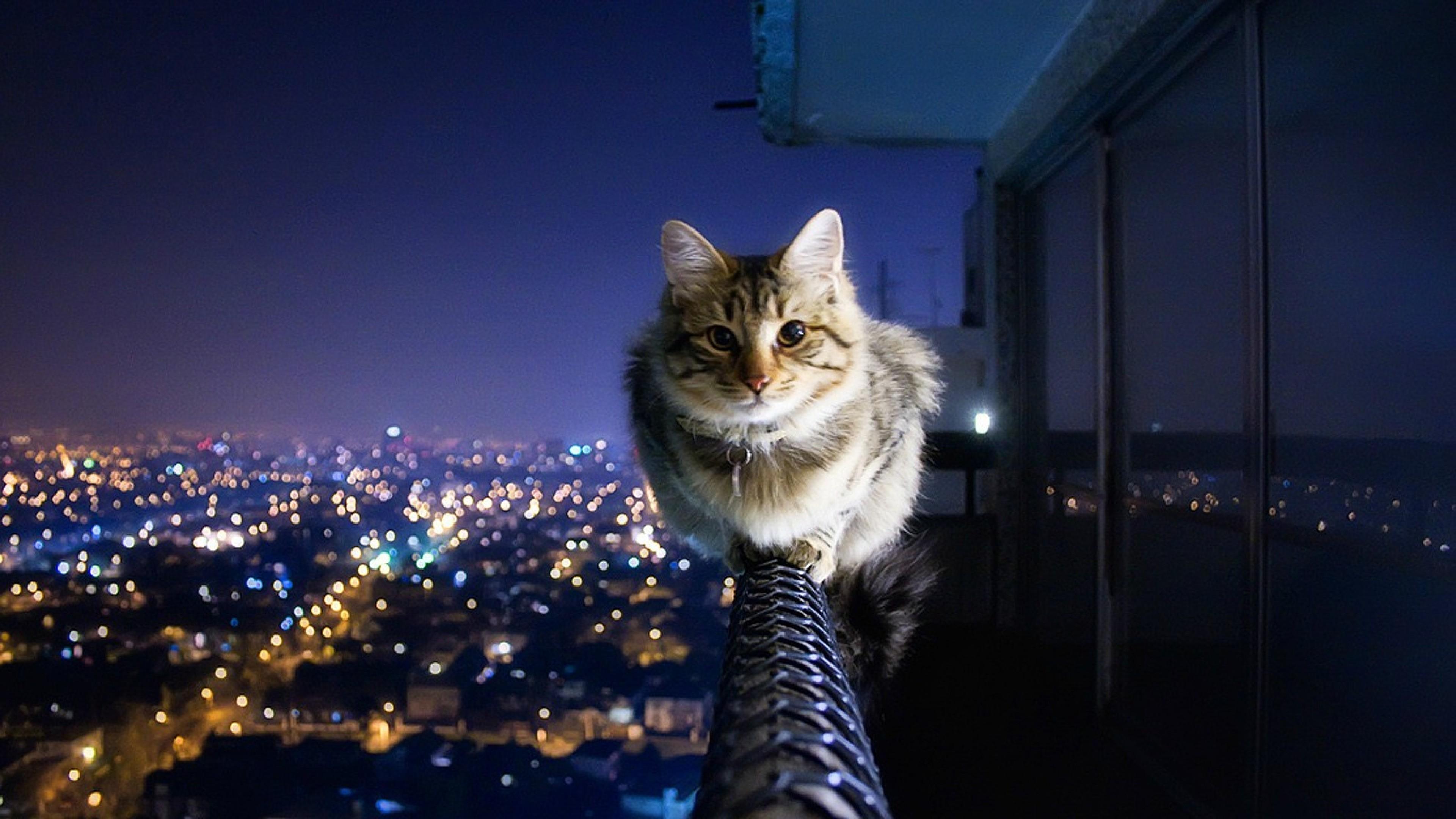 Cat Cityscape Hd Wallpaper 4k Ultra Hd Hd Wallpaper