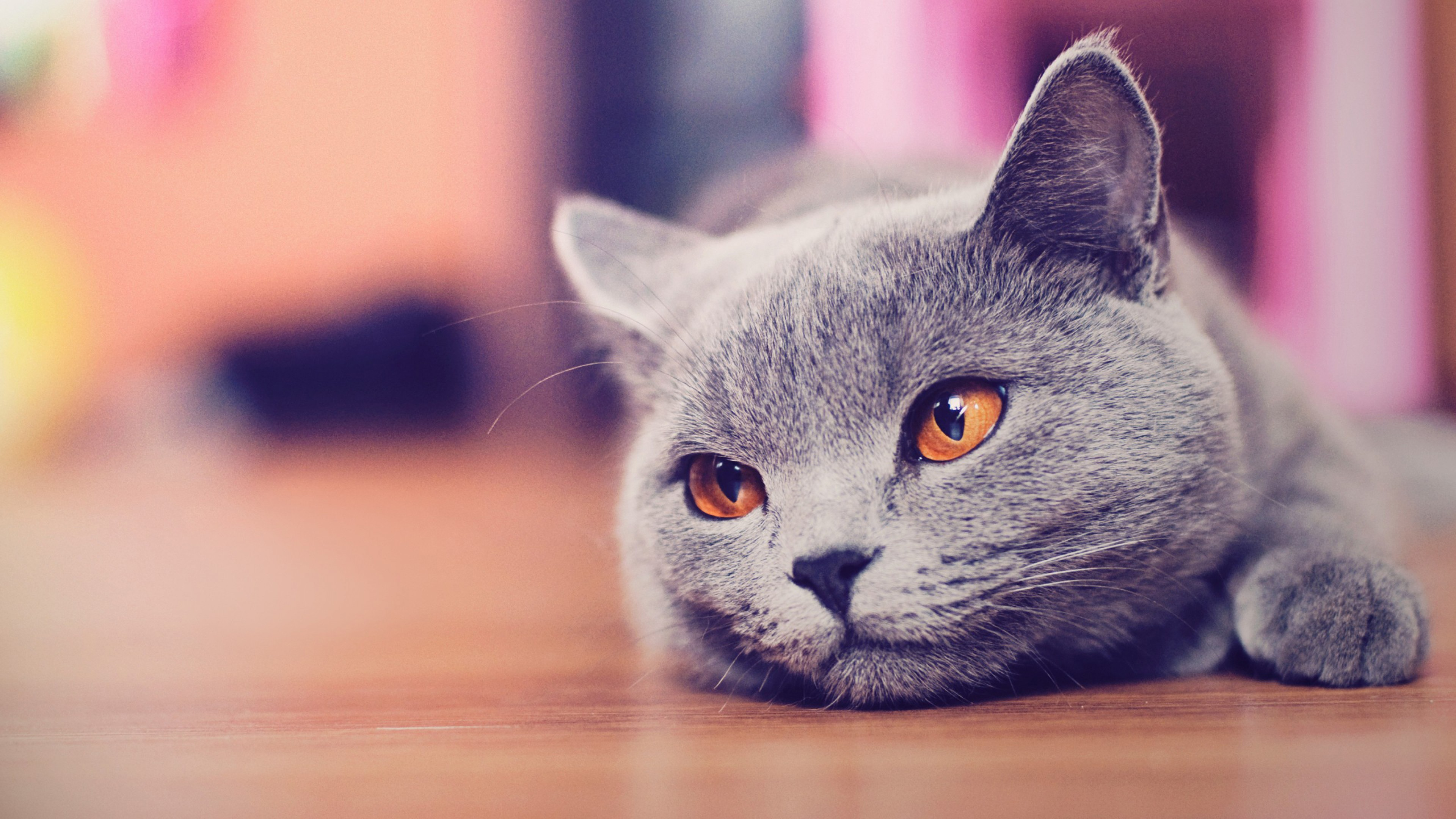 природа животные серый кот морда смотреть
