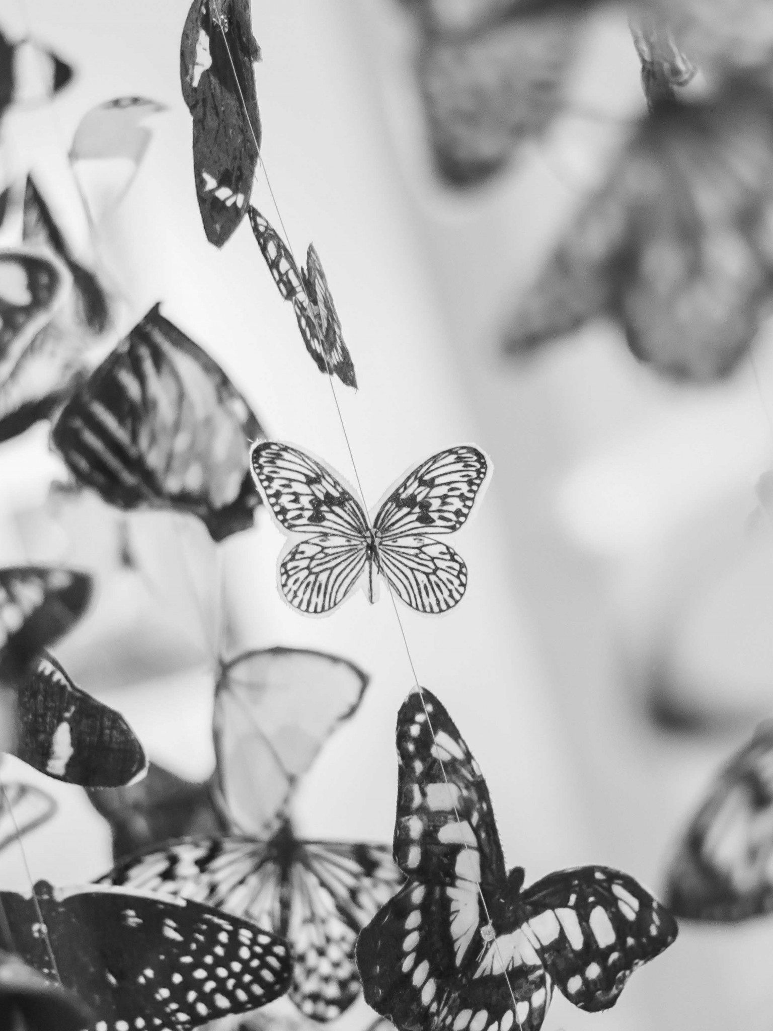 Colorful Beautiful Black And White Butterfly Wallpaper For Desktop Mobiles