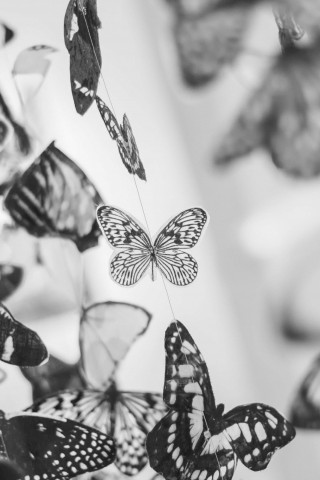 Colorful Beautiful Black And White Butterfly Wallpaper For