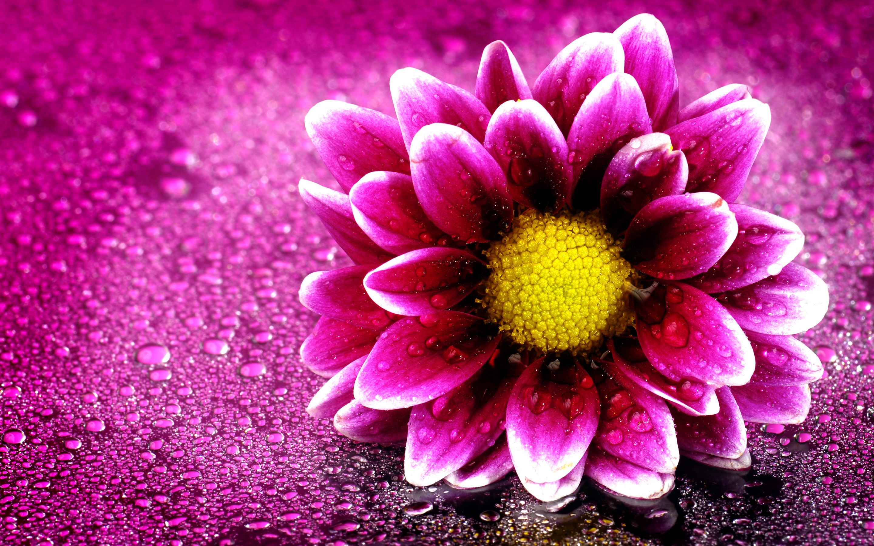 Download Free Small Pink Flower Wallpaper 15 Retina Macbook Pro