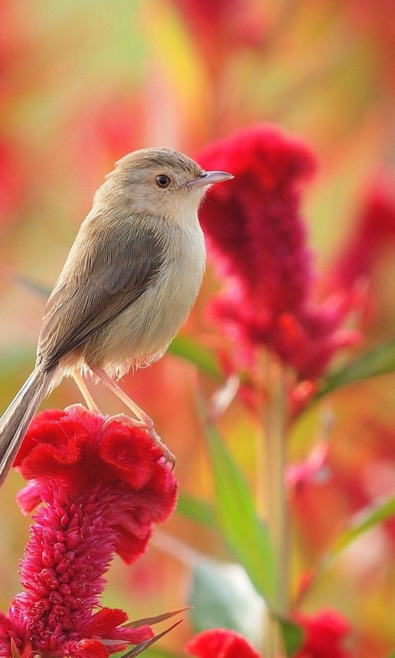 Flowers And Birds Wallpaper For Desktop And Mobile 768x1280 Hd Wallpaper Wallpapers Net