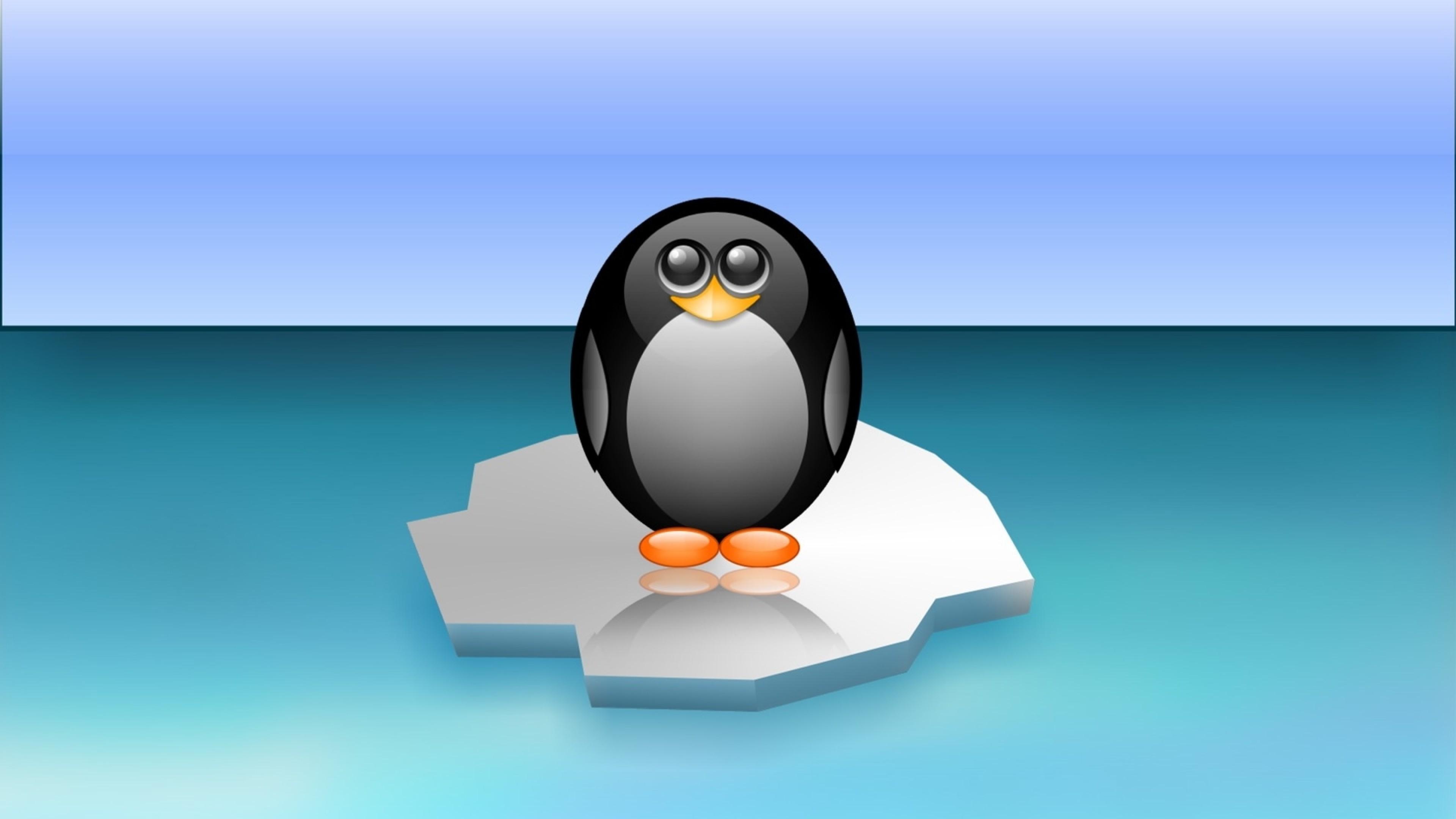 Funny And Cute Penguin Hd Wallpaper 4k Ultra Hd Hd