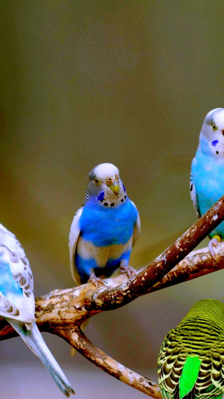 Love Birds Hd Wallpaper Iphone 6 6s Hd Wallpaper Wallpapers Net
