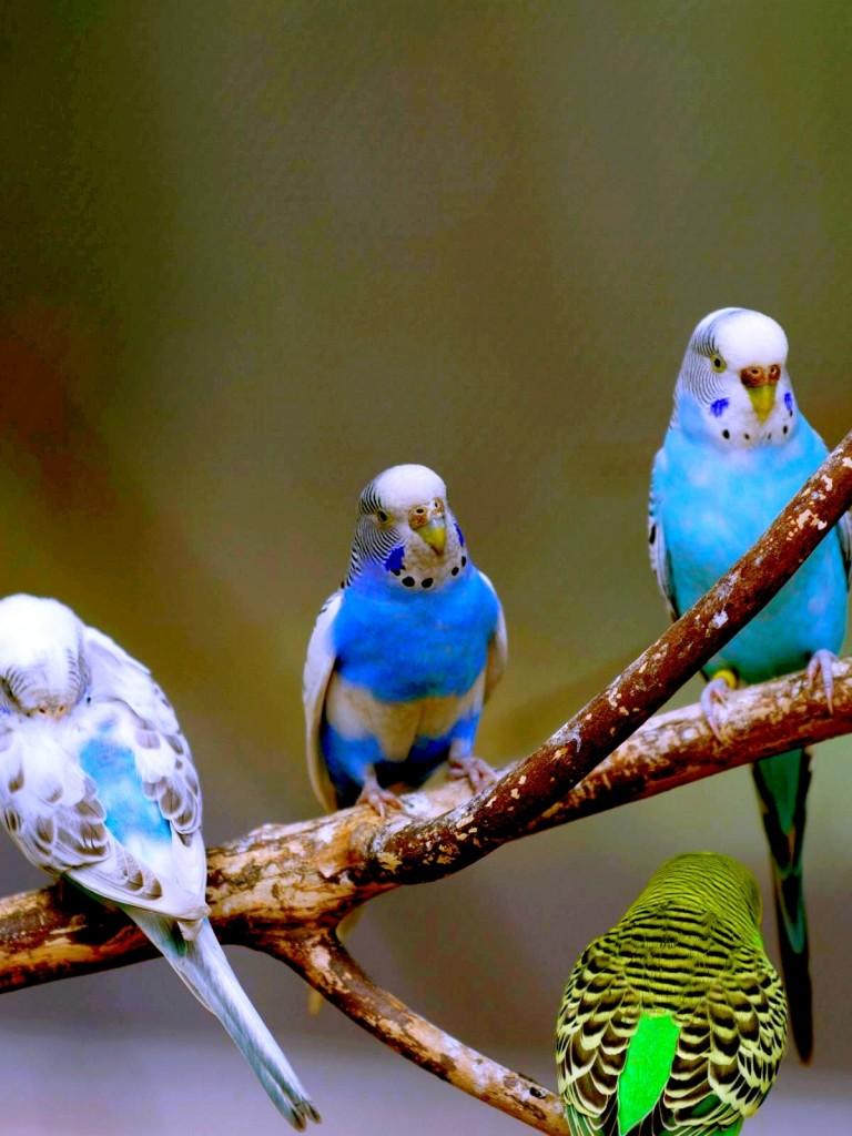 Love Birds Hd Wallpaper Non Retina Ipad Hd Wallpaper Wallpapers Net