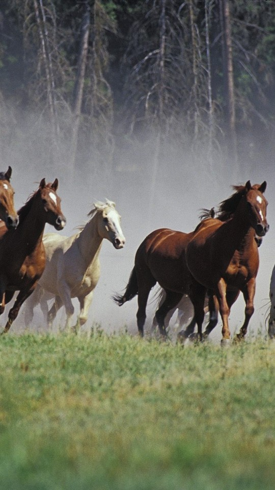 Seven Running Horses Hd Wallpaper 540x960 Hd Wallpaper
