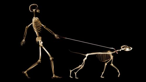 Animal X-Ray HD Wallpaper