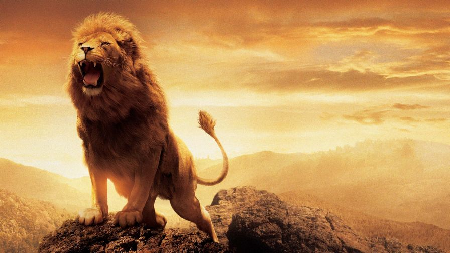 Aslan Narnia Lion Hd Wallpaper for Desktop and Mobiles