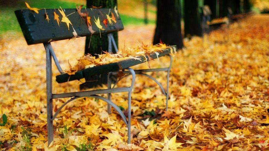 Autumn Leaves On A Park Bench Hd Wallpaper Wallpapers Net