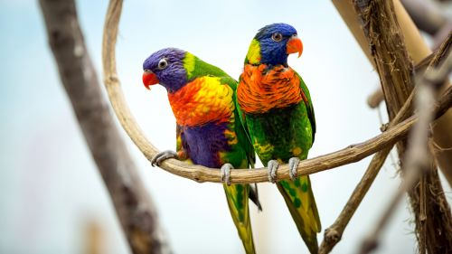 Beautiful Green & colorful Parrots Wallpaper