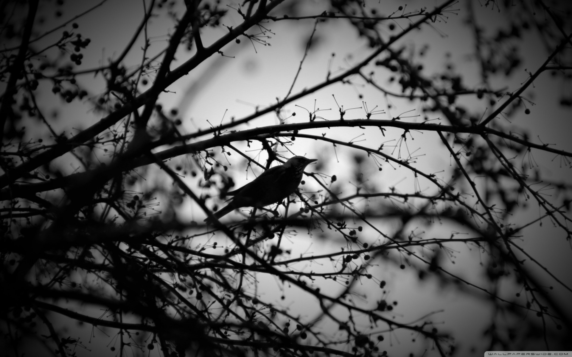 Black And White Bird And Tress Wallpaper for Desktop and Mobiles