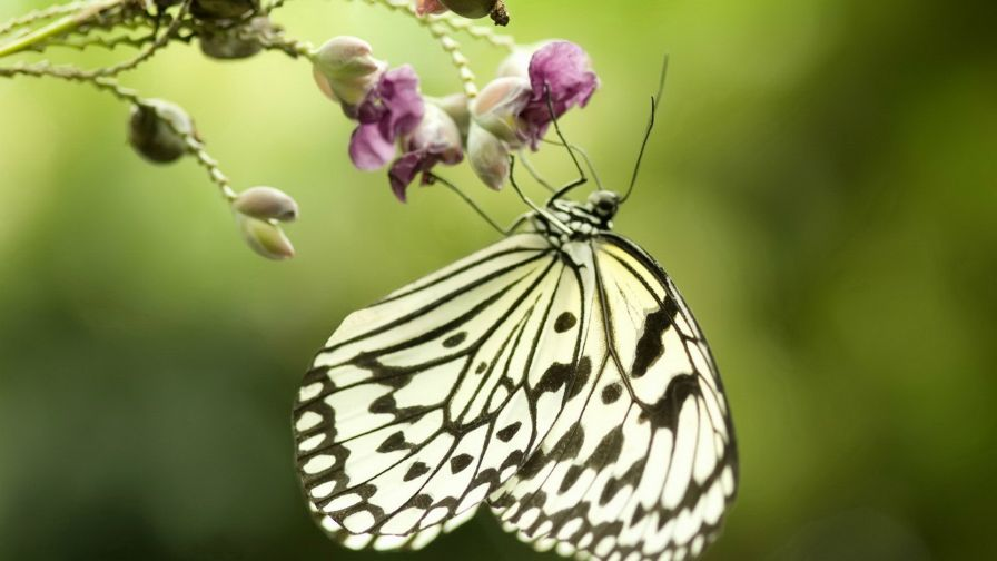 Butterfly Feeding Wallpaper for Desktop and Mobiles