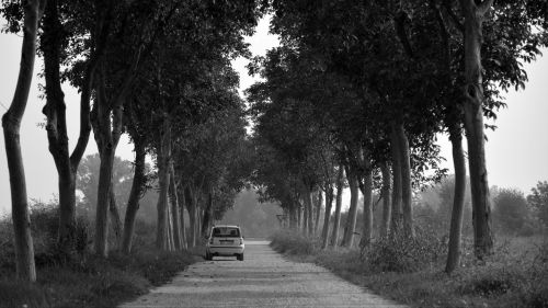 Car under trees HD Wallpaper