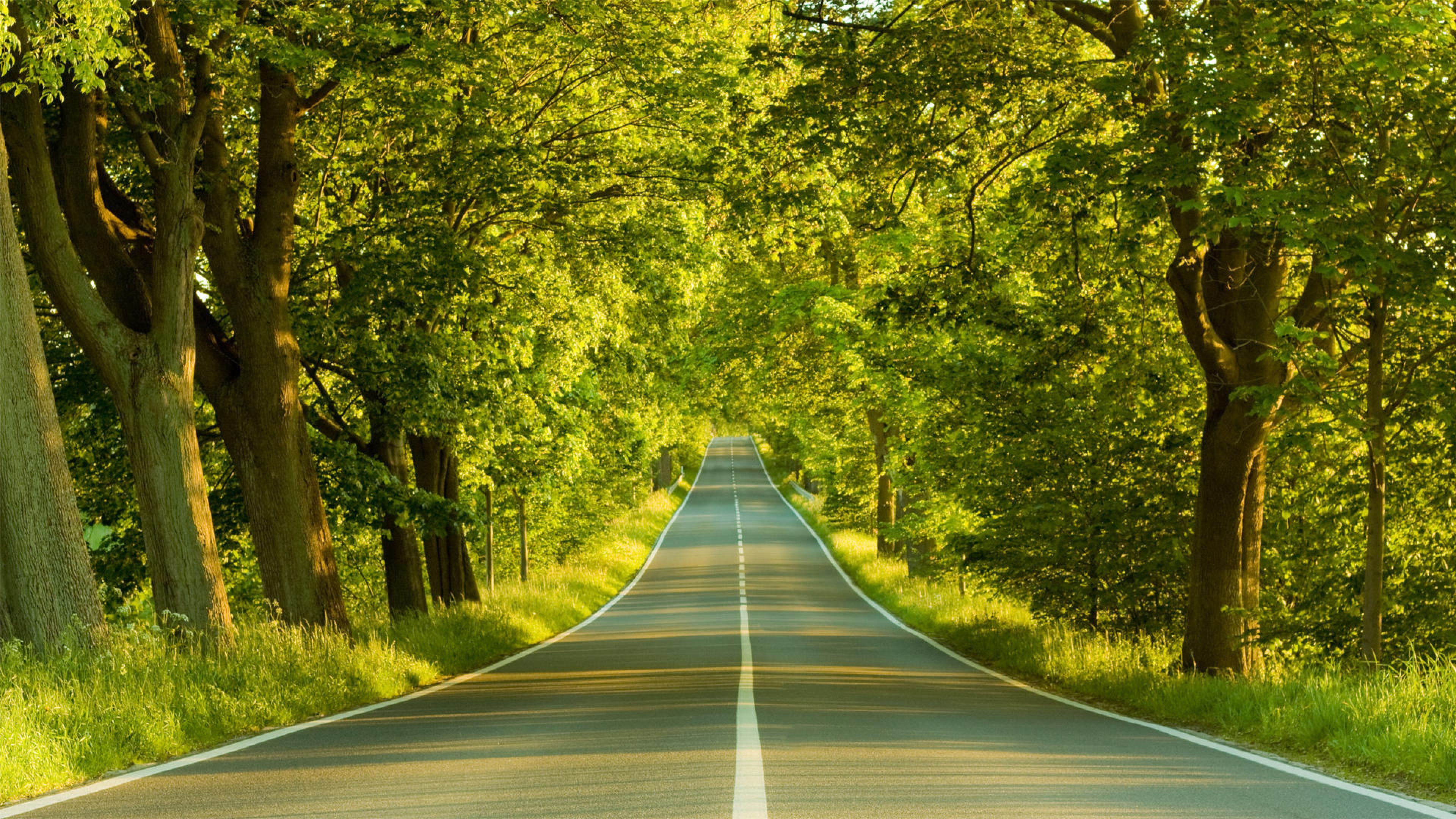 Дорога и лес скачать