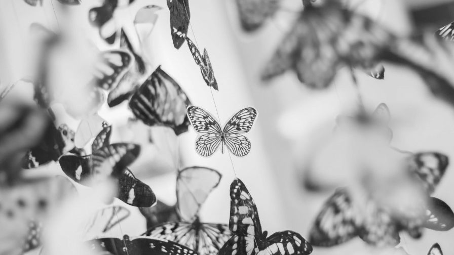 Colorful Beautiful Black and White Butterfly Wallpaper for Desktop and Mobiles