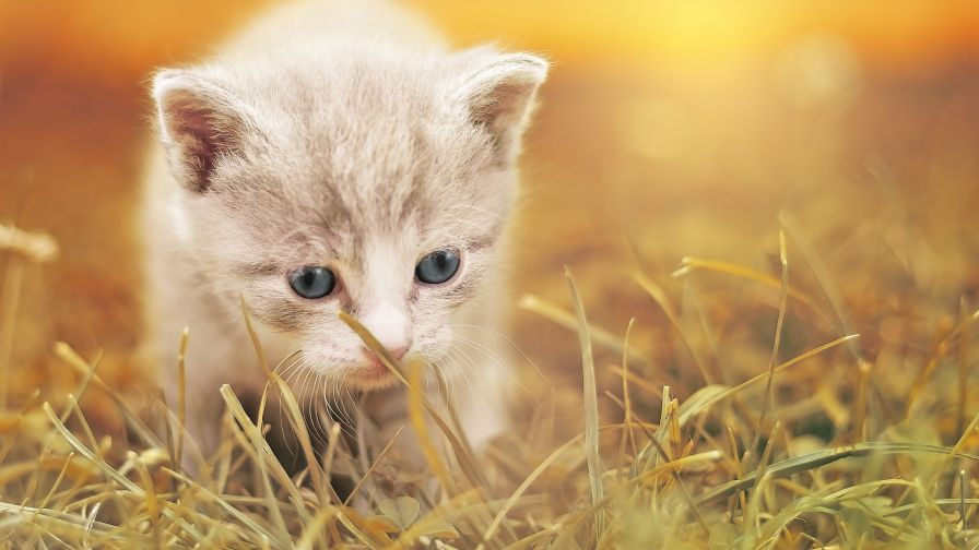 Download Cute Kitty Desktop Wallpapers in HD