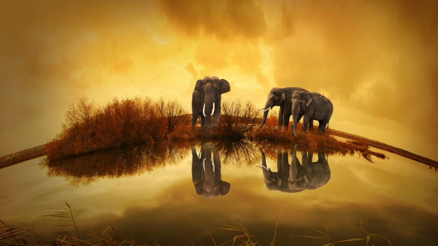 Download Free Elephant High Quality Hd Wallpaper for Desktop and Mobiles
