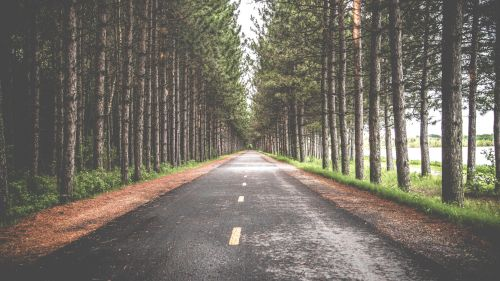 Download Full HD Tree Lined Road Wallpaper