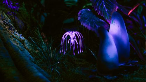 Fantastic plant glowing at dark HD Wallpaper