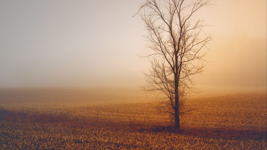 Field trees under a fogy weather HD Wallpaper