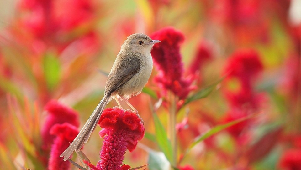 Flowers and Birds Wallpaper for Desktop and Mobile