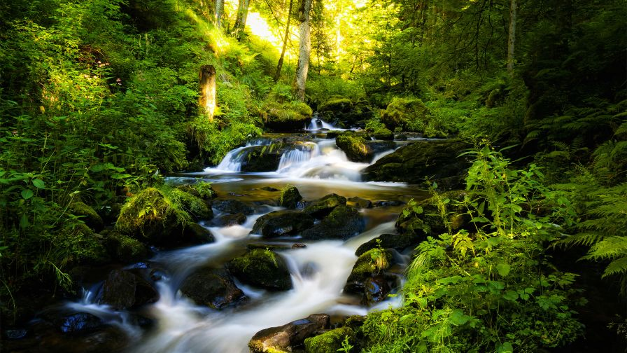 Forest Water Stream