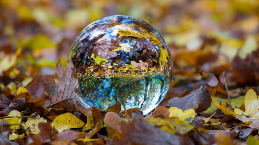 Free Glass Ball on Leaves Wallpaper for Desktop and Mobiles