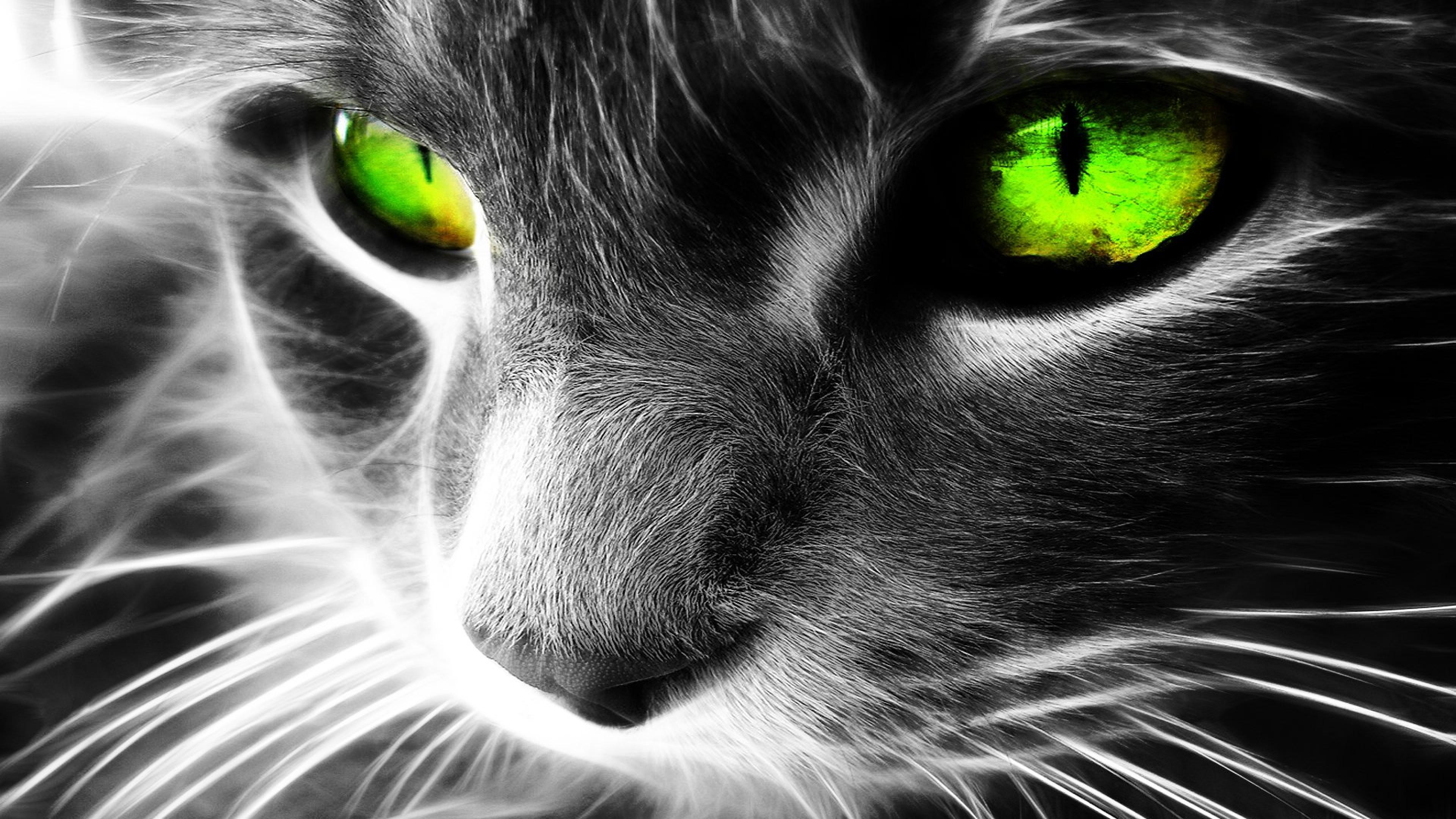 кот глаза зеленые бесплатно