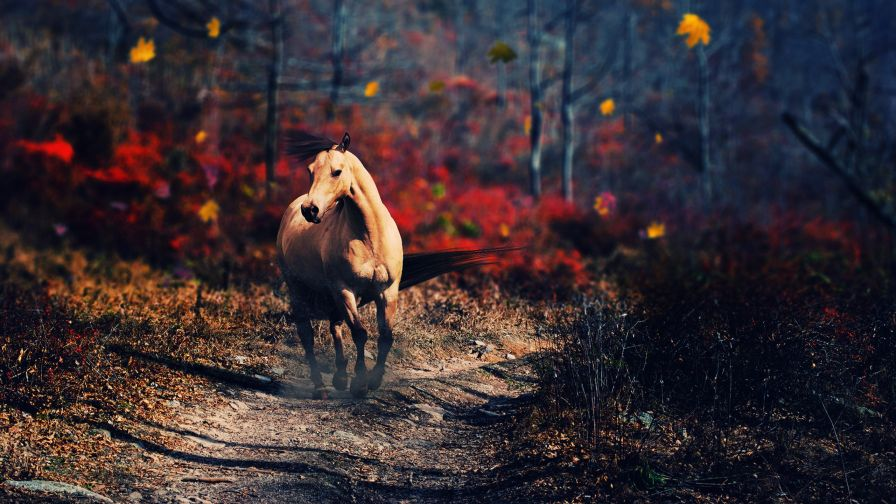 High resolution Free Running Horse Wallpaper in HD