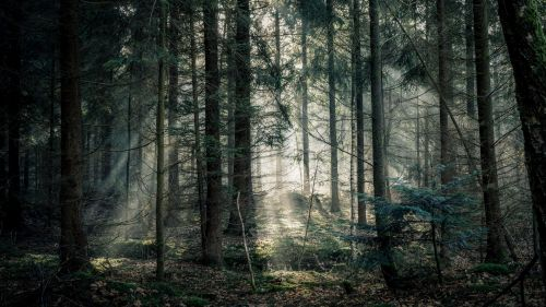 Image of a fogy forest HD Wallpaper