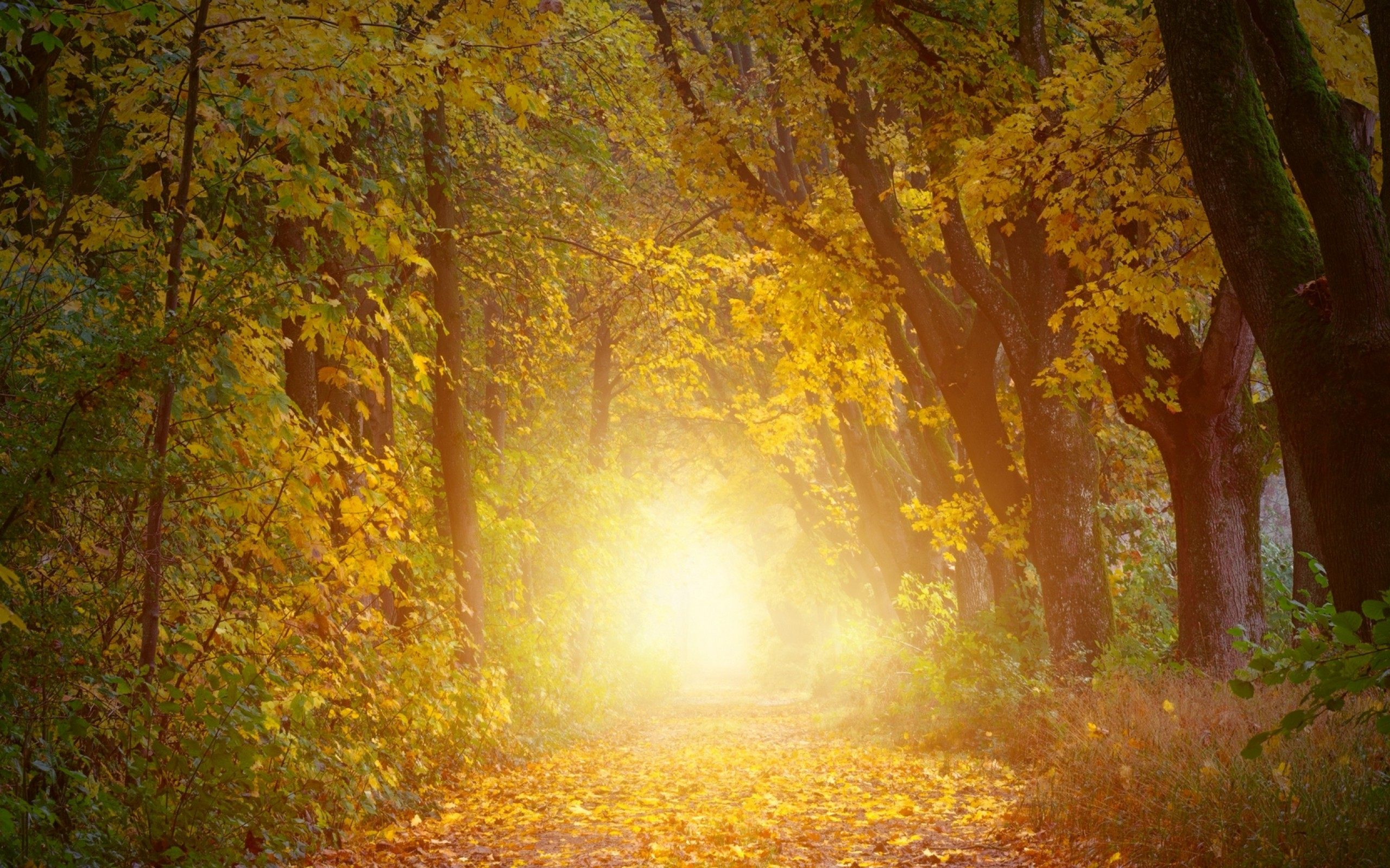 Path through the sunlight HD Wallpaper