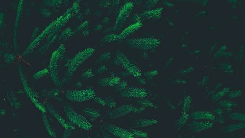 Pine needles HD Wallpaper