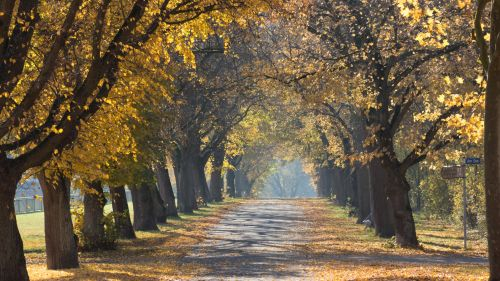 Serene Country Lane