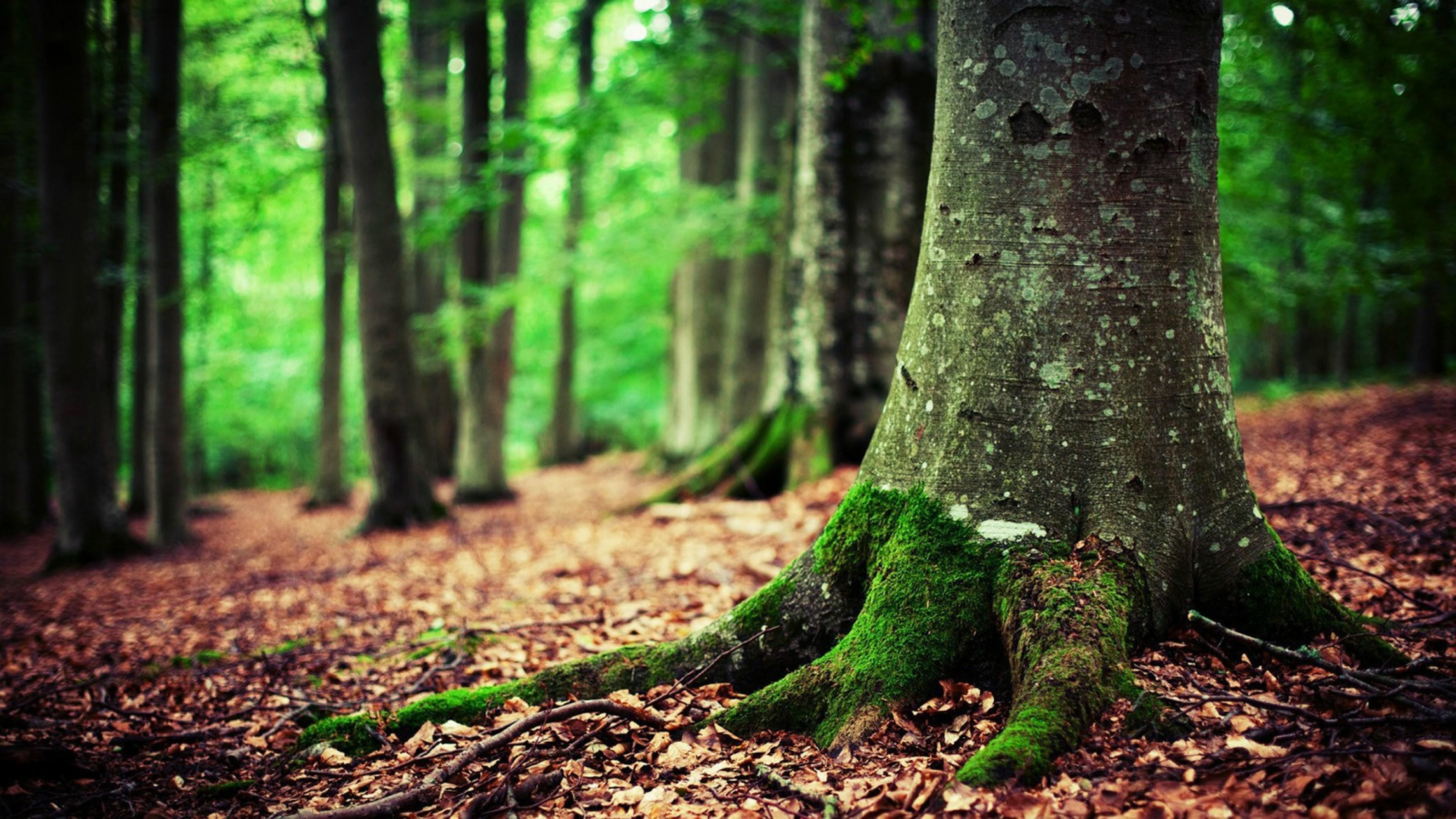 Suicide Forest Hd Wallpaper 4k Ultra Hd Hd Wallpaper