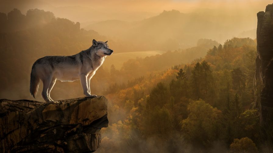 Wolf At The Edge Of A Cliff Hd Wallpaper Wallpapersnet